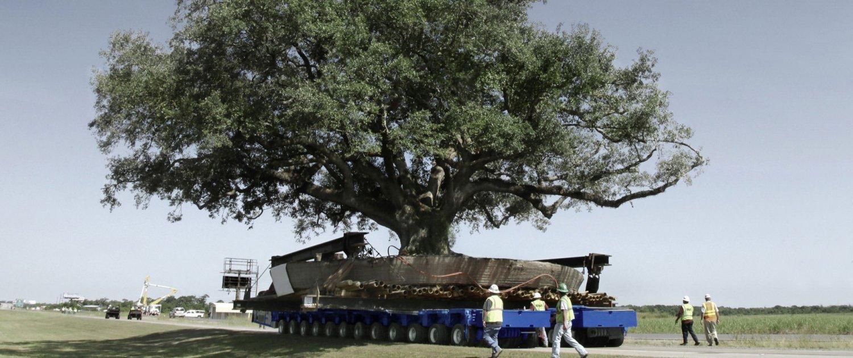 Ein Baum wird auf einem Transporter transportiert